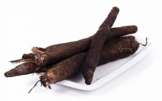 Скорцонера — полезные свойства этого лечебного растения и его фото