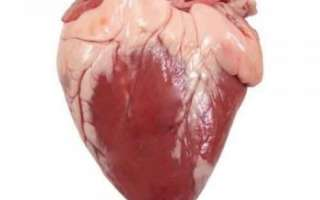 Сердце баранье – состав и калорийность, пищевая ценность продукта; использование в кулинарии; полезные свойства