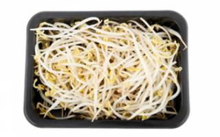 Ростки сои — проросшие: описание их пользы, калорийности, а также фото