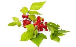 Костяника (северный гранат) – описание полезных свойств, вреда и противопоказаний; применение плодов и листьев в лечении и кулинарии; фото ягод