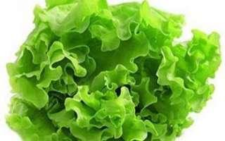 Салат — как правильно хранить листья, их польза и вред