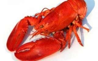 Описание качеств лобстера, как он выглядит (фото), советы по его выбору; как приготовить морепродукт, а также рецепты с ним