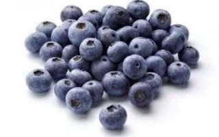 Голубика — полезные свойства, виды и вред от ягоды