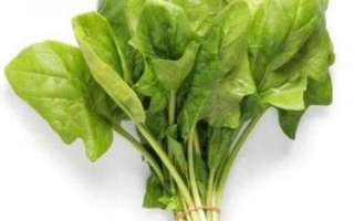 Полезные свойства шпината с фото, его калорийность, а также рецепты приготовления этого продукта
