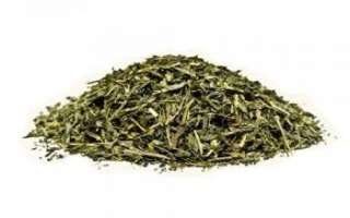 Зеленый чай — полезные свойства, вред и противопоказания