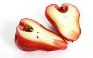 Сизигиум — использование данного растения, как гомеопатического средства