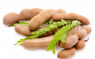 Тамаринд — польза этого фрукта, описание его прочих свойств с фото и отзывами