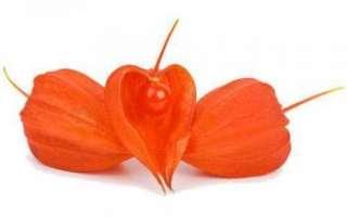 Польза и вред съедобных плодов физалиса