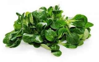 Полевой салат – описание с фото растения; полезные свойства валерианеллы салатной и ее выращивание; рецепты блюд