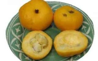 Араза — описание фрукта с фото; характеристика его полезных свойств, вреда, противопоказаний; использование в кулинарии