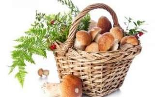 Грибы – использование в кулинарии, состав и польза