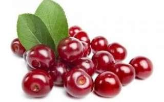 Войлочная вишня – польза, вред и применение в кулинарии