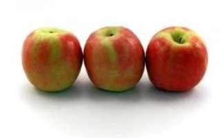 Яблоки Мантет — фото плодов, их описание, а также отзывы об этом сорте