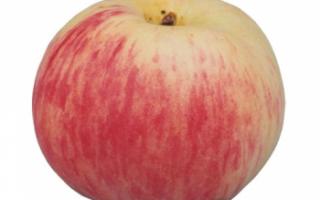 Яблоки Грушовка — фото данного сорта яблок, а также его подробное описание