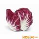 Салат радичио – описание с фото растения; его сорта, полезные свойства и калорийность; использование радичио в кулинарии и лечении; рецепты блюд