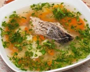 Уха из сазана – простые рецепты в домашних условиях