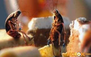 Борная кислота от тараканов — как использовать и травить?