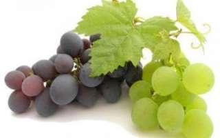 Лечебные и целебные свойства винограда