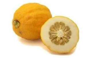 Цитрон — описание растения и его плодов с фото, а также отзывы об этом фрукте