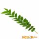 Листья карри – описание с фото продукта; его лечебные свойства и применение; польза и вред; использование в медицине и кулинарии