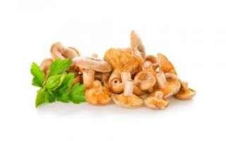 Рыжики — съедобные грибы: описание полезных свойств с фото
