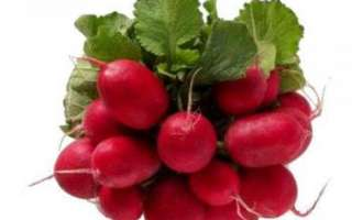 Красный редис — состав витаминов и прочих полезных микро- и макро- элементов