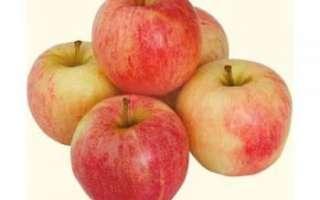 Яблоки Гала — описание данного сорта с отзывами и фотографиями