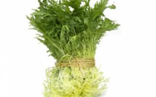 Салат фризе – его полезные свойства и калорийность; описание с фото листьев фризе и рецептами блюд