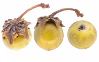 Нансе — польза и вред этого экзотического фрукта