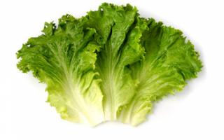 Салат латук — сорта и выращивание; польза и вред листьев, а также их калорийность