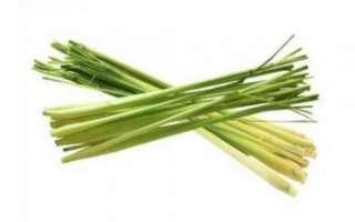 Лимонная трава — полезные свойства и противопоказания