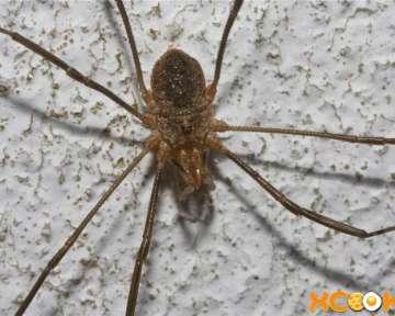 Как избавиться от пауков в частном доме, в квартире, в теплице и в саду?