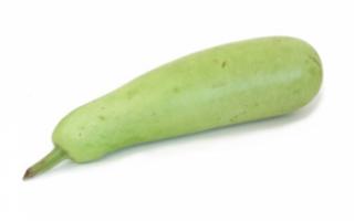 Восковая тыква (зимняя) — выращивание и ее полезные свойства