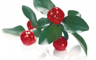 Ацерола (барбадосская вишня) — что это такое?