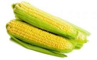 Кукуруза — калорийность, польза и вред