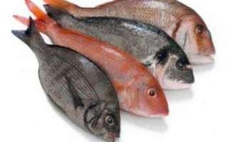 Рыба – речные и морские виды, польза и вред, рецепты блюд
