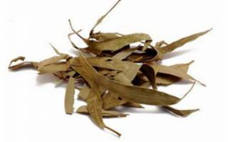 Листья эвкалипта – их лечебные свойства и применение; польза и противопоказания; рецепты, как использовать