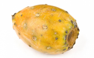Опунция индийская (инжирная) — выращивание и полезные свойства