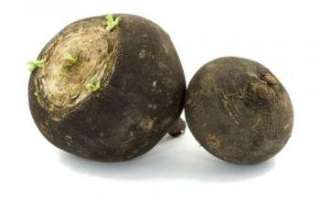 Плоды редьки — содержание витамин и их полезные свойства для здоровья