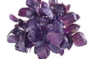 Базилик фиолетовый — польза, противопоказания, посадка и уход