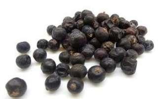 Ягоды можжевельника — применение, полезные свойства и вред