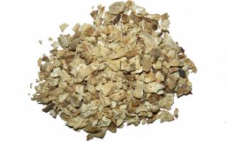 Корень цикория — применение, лечебные свойства и противопоказания
