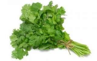Кинза – польза и вред растения; его выращивание; полезные свойства и противопоказания; использование кориандра в кулинарии и лечении; рецепты блюд