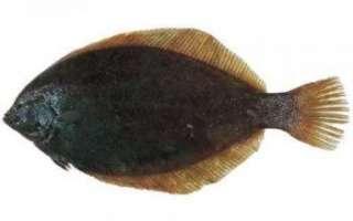 Описание с фото и характеристика черноморской камбалы, как её выбирать и готовить; рецепты с рыбой калкан